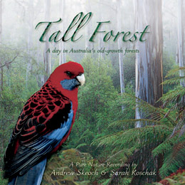 Tall Forest - Nature Sound Recording by Listening Earth